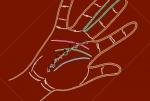 చేతిలో ఉన్న ఈ సంకేతాలు మీ భవిష్యత్  రహస్యాలు రివీల్ చేస్తాయి..