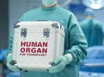 Organ Donation Day;ఏ అవయవాలను దానం చేయవచ్చు మరియు మీరు ఎలా దాతగా మారగలరో తెలుసుకోండి..