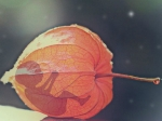 24 వారాల తర్వాత కూడా అబార్షన్ కు అనుమతించబడుతుంది, కానీ కండీషన్స్ అప్లై..