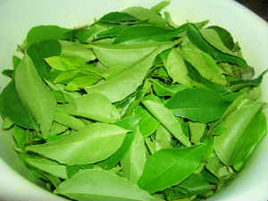 Curry Leaves for Diabetic Patient..