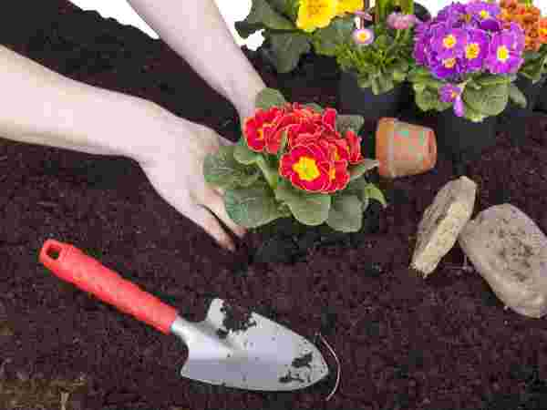 Simple Gardening Tips For Looking After Flowers In Winter