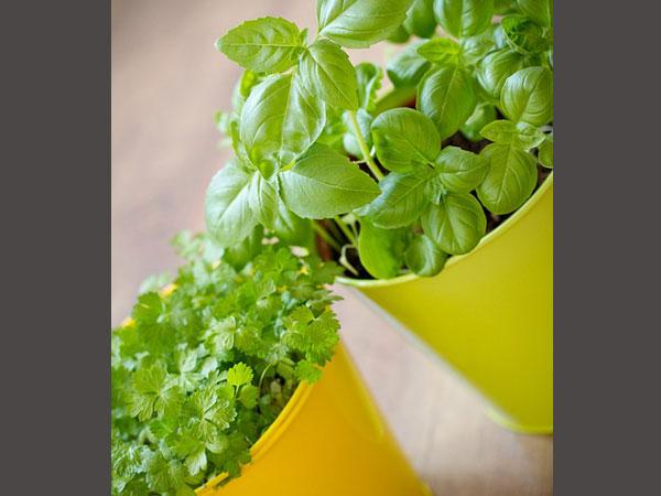 9 Herbal Remedies treat diabetes at Home | డయాబెటిస్ ను ...