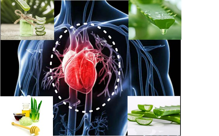 5 Powerful Ways that Aloe Vera Takes Care of Your Heart