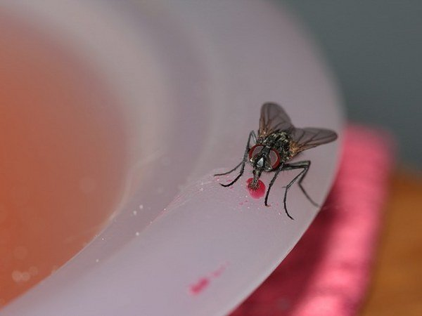 Houseflies Can Spread These Diseases, Be Careful!