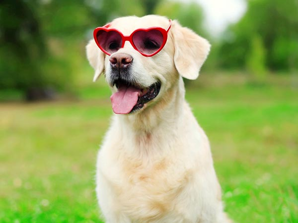 Summer pet Care tips for Puppies