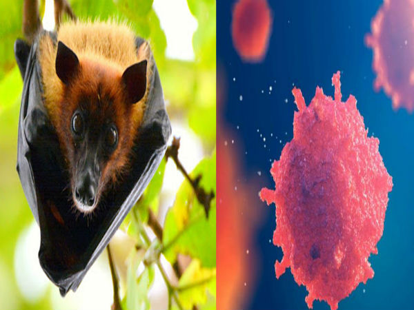 Nipah virus outbreak in Kerala: Signs and symptoms of NiV, transmission, treatment, prevention