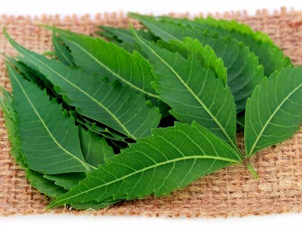 10 Ways To Use Neem In Daily Life For Overall Wellness