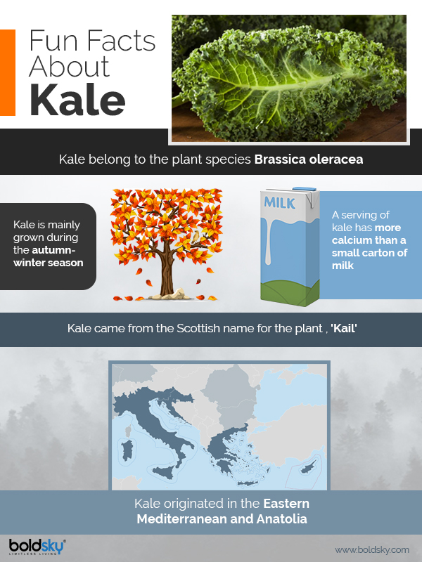 Kale: Types, Nutritional Benefits & How To Eat