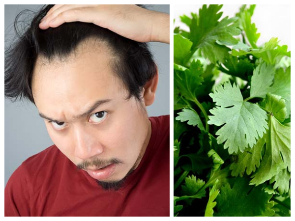 How To Use Coriander Leaves for Hair Loss and Re-growth