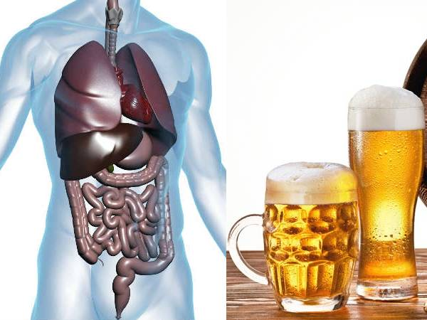 What Happens In Your Body 24 Hours After Drinking A Beer,