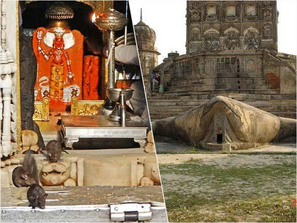Peculiar temples : దోమలు, కప్పలు, గబ్బిలాలు, మూషికాలకు ఆలయాలున్నాయని మీకు తెలుసా...