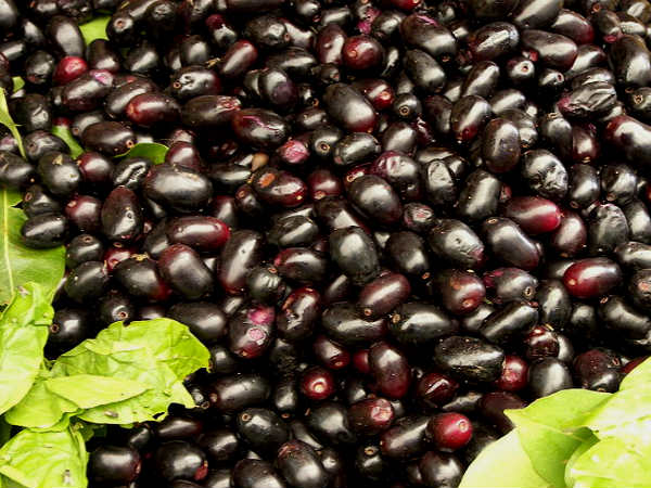 Diabetics: Jamun Seeds For Diabetics: Heres How You Can Use Them In Your Diet