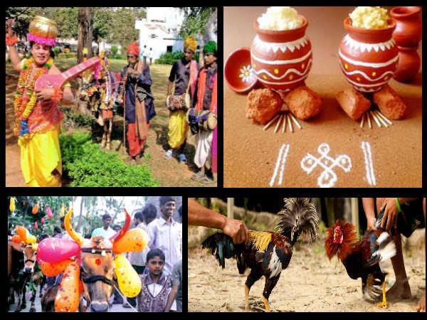 Makar Sankranti 2021 : కోడి పందేలు.. గాల్లో పతంగులు.. కొత్త అల్లుళ్ల రాకతో సంక్రాంతి సంబురాలు...!