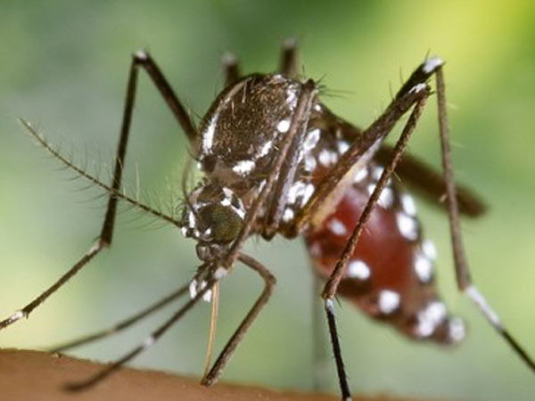 Malaria in kids : పిల్లలలో మలేరియా: లక్షణాలు మరియు చికిత్స, దానిని ఎలా నివారించాలి?