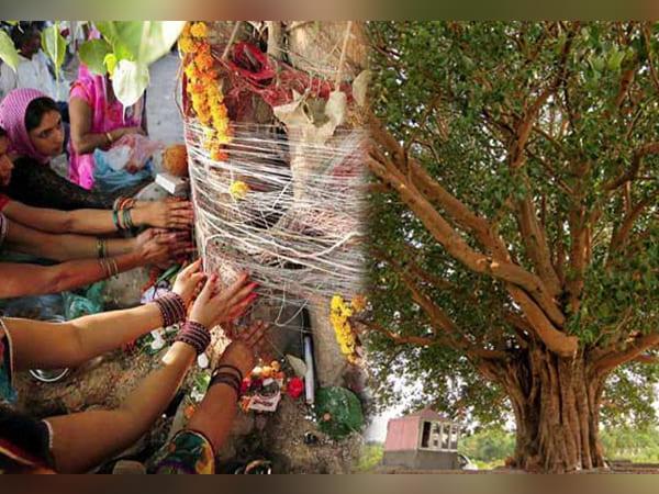 రావి చెట్టును ఆరాధించండి, తద్వారా మీకు జీవితంలో అదృష్టం పొందుతారు