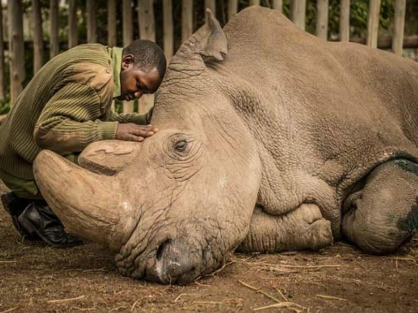 World Rhino Day 2021:ఖడ్గమృగాల గురించి ఈ ఆసక్తికరమైన విషయాలు తెలుసా?