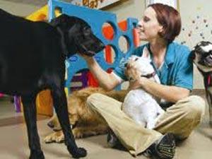 Vastu Shastra Affects Your Pet Care 100811 Aid