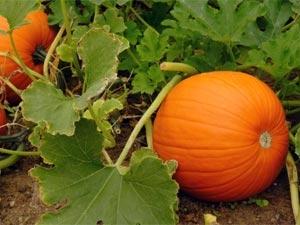 Easy Grow Vegetables Your Garden 270811 Aid