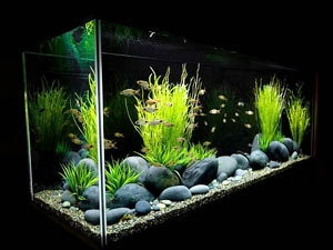 Beautiful Fish Your Home 300811 Aid