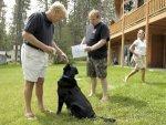 Montana Math Dog Beau 050911 Aid