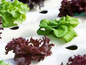 Hydroponic Gardening A Soil Free 071011 Aid
