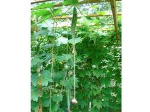 Growing Vegetables Terrace Garden Aid