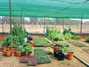 How Take Care Kitchen Garden During The Summer Season Aid