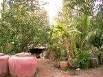 Four Good Herbal Plants Kitchen Garden Aid