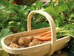 Ideas Seasonal Plantation Aid