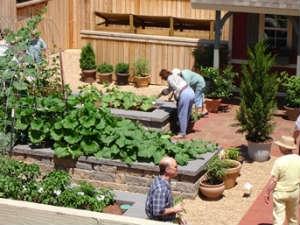 Fertilizing Vegetable Garden Soils Aid