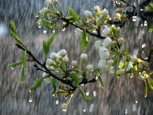 Ways Use Rains Your Garden