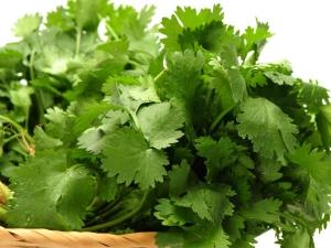 Health Benefits Coriander Leaves