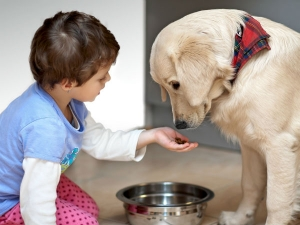 12 Common Foods That Can Kill Your Pets
