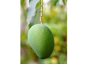 Home Remedies Glowing Skin With Mango