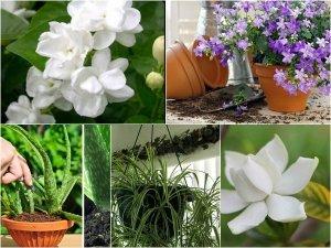 Five Plants Keep Your Bedroom Better Sleep Gardening Tips
