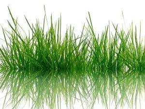 Importance Durva Grass Hindu Rituals