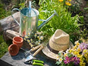 Weird Gardening Tips That You Never Knew Gardening Telugu