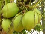 Benefits Coconut Water Health Tips Telugu