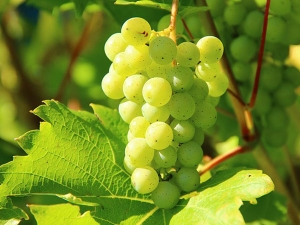 Nutritional Value Green Seedless Grapes