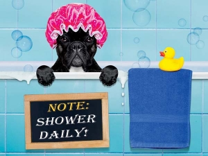 Why Is It Important Shower Every Day