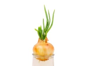 How Grow Green Onions Kitchen