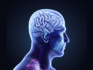 Benefits Eating Almonds The Brain