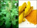 What Happens When You Drink Tulsi Water With Turmeric Every
