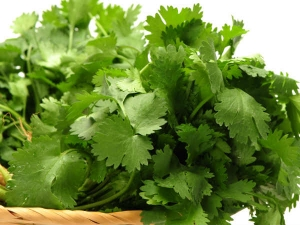 Amazing Health Benefits Coriander