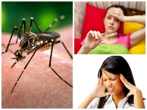 Common Signs Symptoms Chikungunya Diet Tips