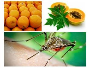 Healthy Diet Tips Dengue Patients