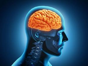 Foods Which Strengthen Your Brain Brainpower
