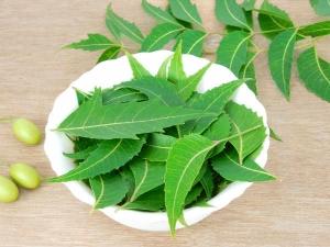 Top Health Benefits Neem Powder
