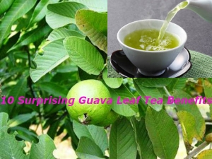Surprising Guava Leaf Tea Benefits Uses