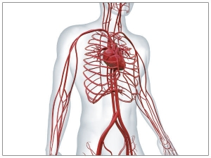 Effects Poor Blood Circulation